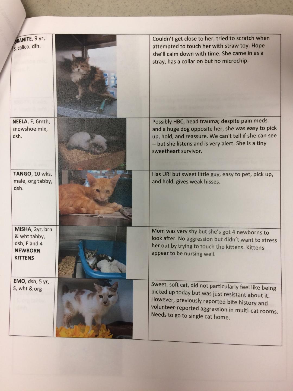 example-cats-facing-euthanasia-blog-posts