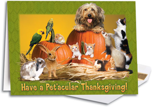 thanksgivingpet